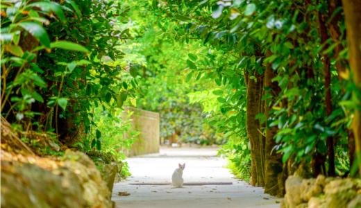 マヌカハニーを猫に与えるときの量は、どれくらいが適性なの?
